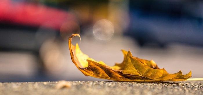 vulnerable vulnerability leaf